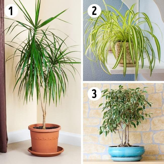 Топ-15 растений для каждой комнаты