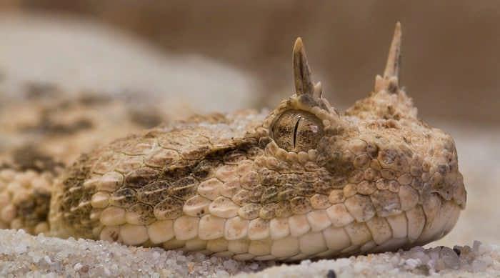 Топ 10 самых красивых змей планеты