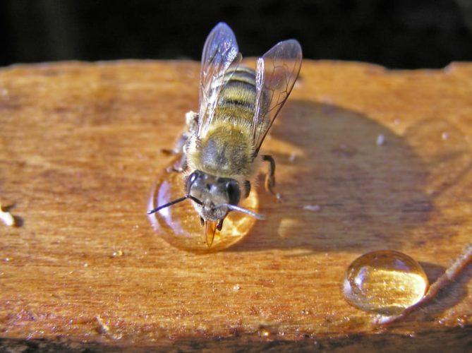 Лечение пчелами болезни Бехтерева