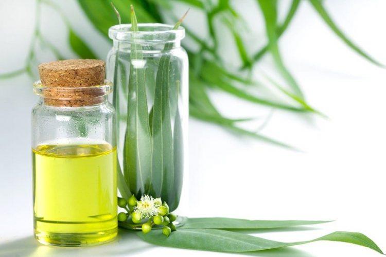 Масло эвкалипта содержит кверцетин, витамин Е, кофейную кислоту
