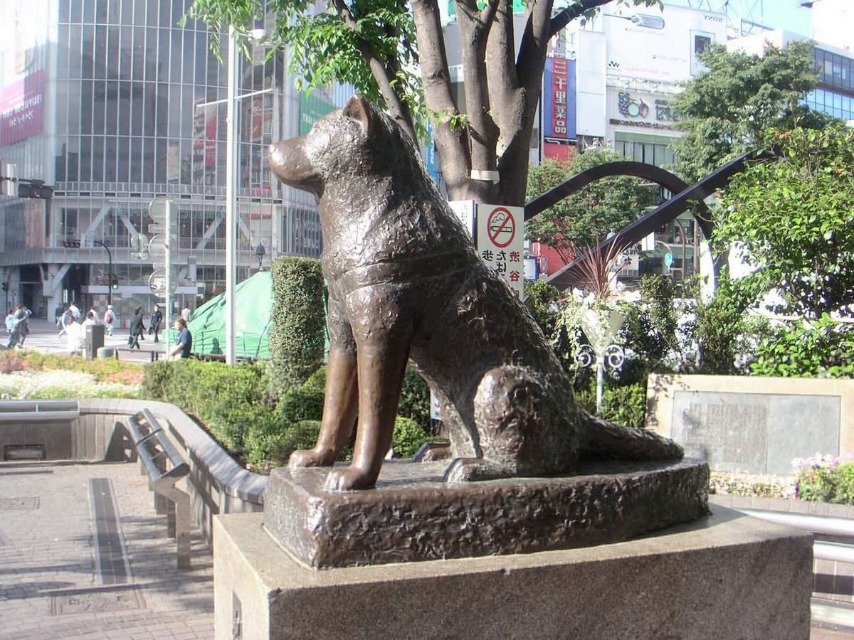 Хатико, Токио, Япония.