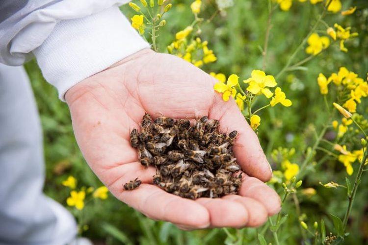 Лечение рассеянного склероза пчелами