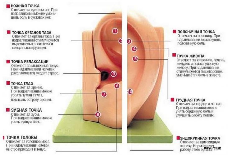 Простые приемы массажа для улучшения здоровья