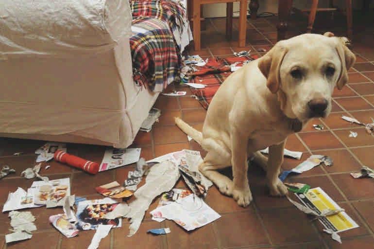 Виноватые собаки - веселая подборка видео и фото
