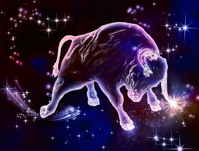 звездный телец рисунок