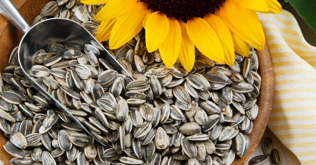 wsi imageoptim hipwee  sunflower seeds