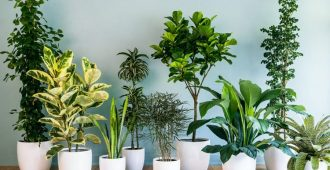 wsi imageoptim house plants