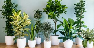 wsi imageoptim house plants decor grouping Cropped e