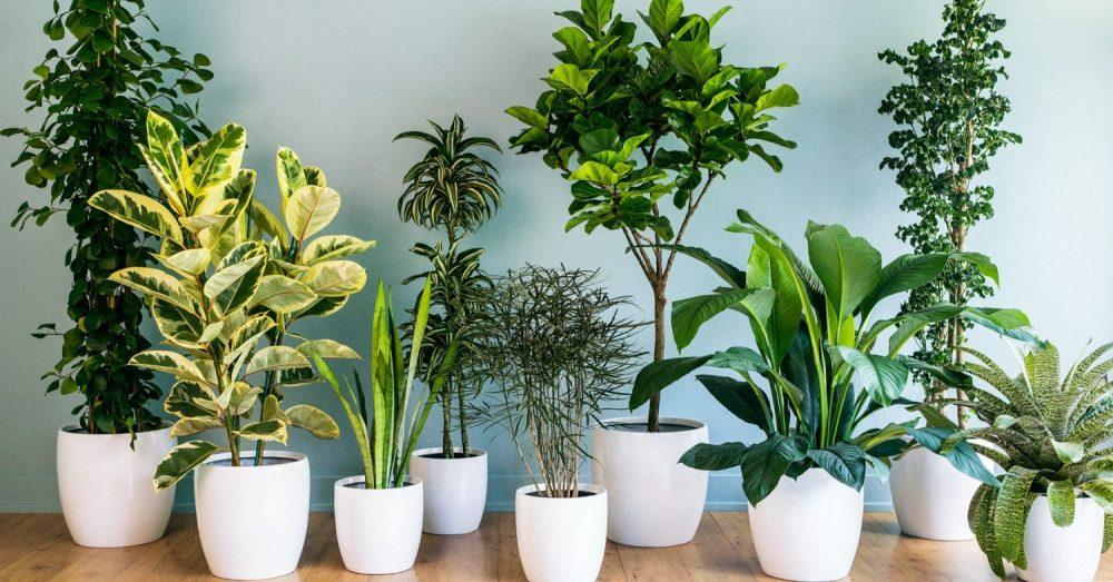 9 лечебных комнатных растений на подоконнике - выбирайте