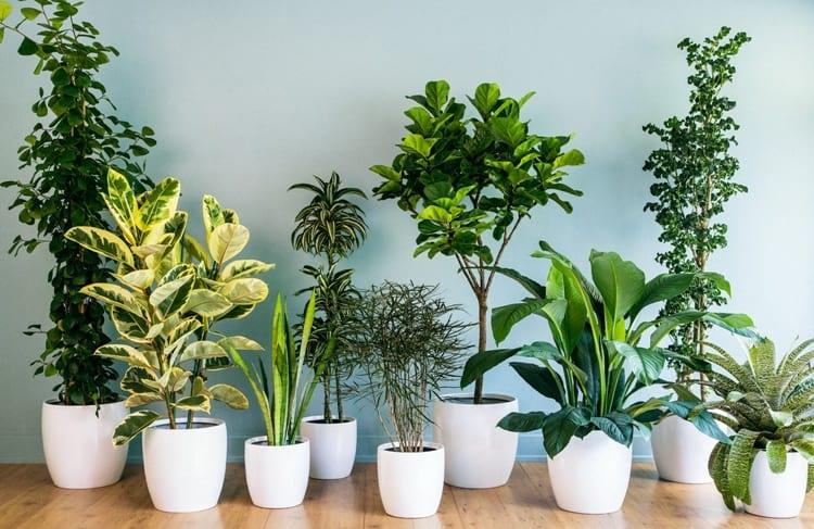 wsi imageoptim house plants