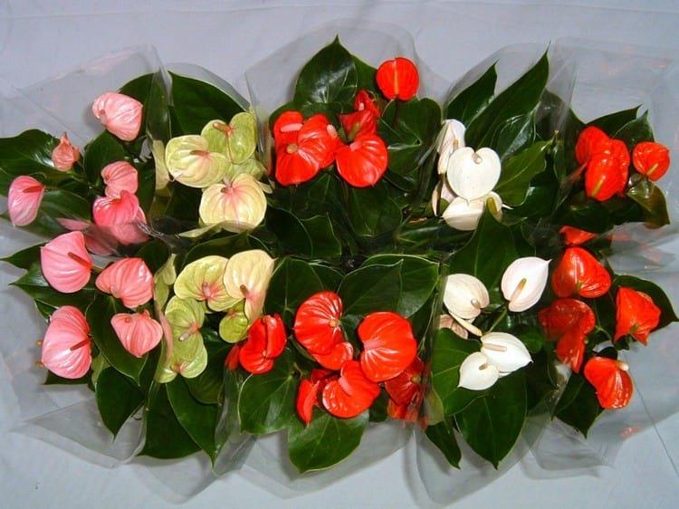 Цветок мужское счастье для женщины