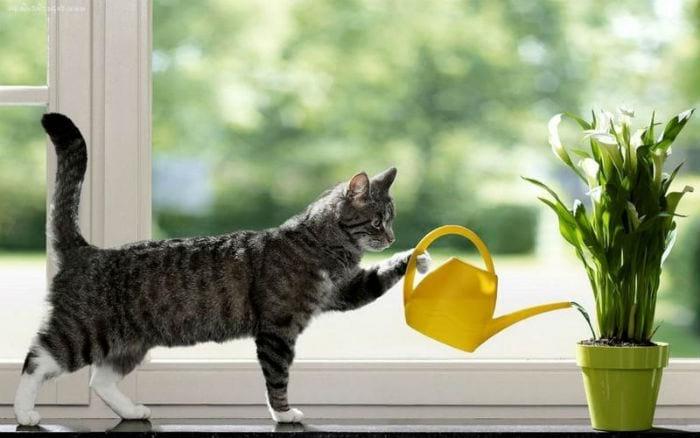 кошка поливает цветок