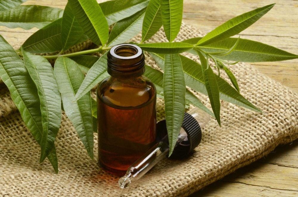 Масло чайного дерева: показания к применению