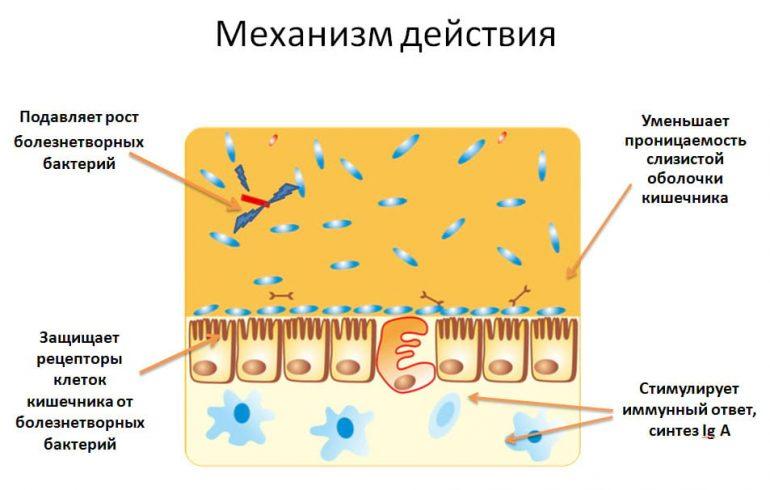 Как действуют пробиотики