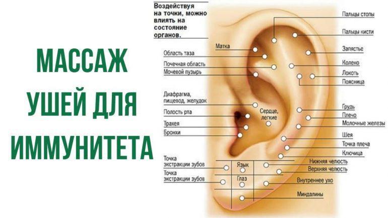 Массаж ушной раковины как правильно делать