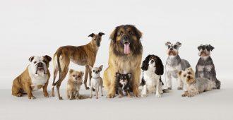 Английские породы собак: классификация и характеристика