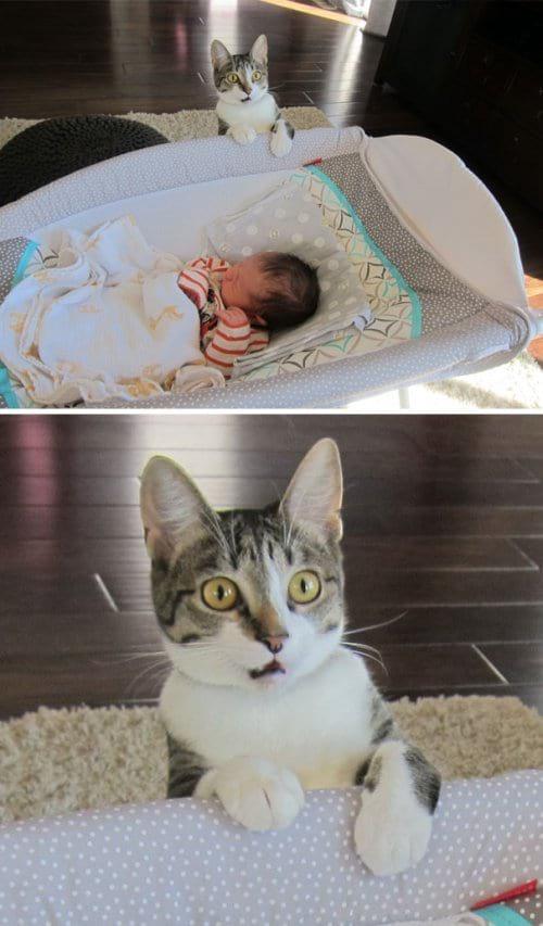 Топ самых артистичных кошек