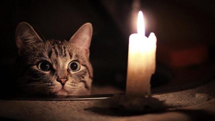 взгляд кошки и свечка