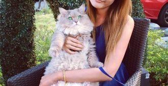 Пушистый огромный кот Бон Бон из Тайланда, с которым все фотографируются