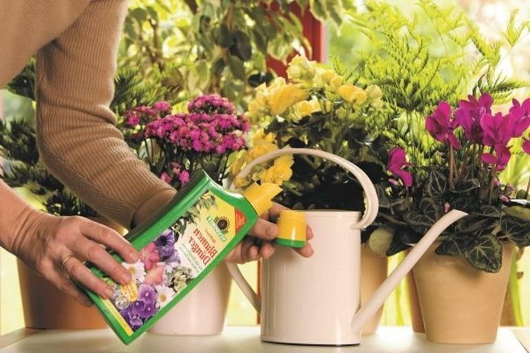 чем подкормить комнатные цветы в домашних условиях